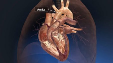 3d heart animation